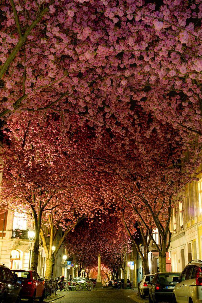 amazing-tree-tunnels-1
