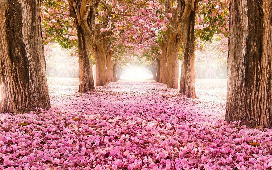 amazing-tree-tunnels-11
