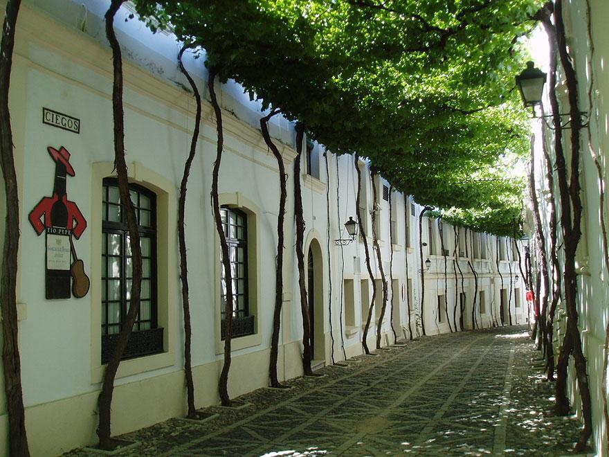 amazing-tree-tunnels-15