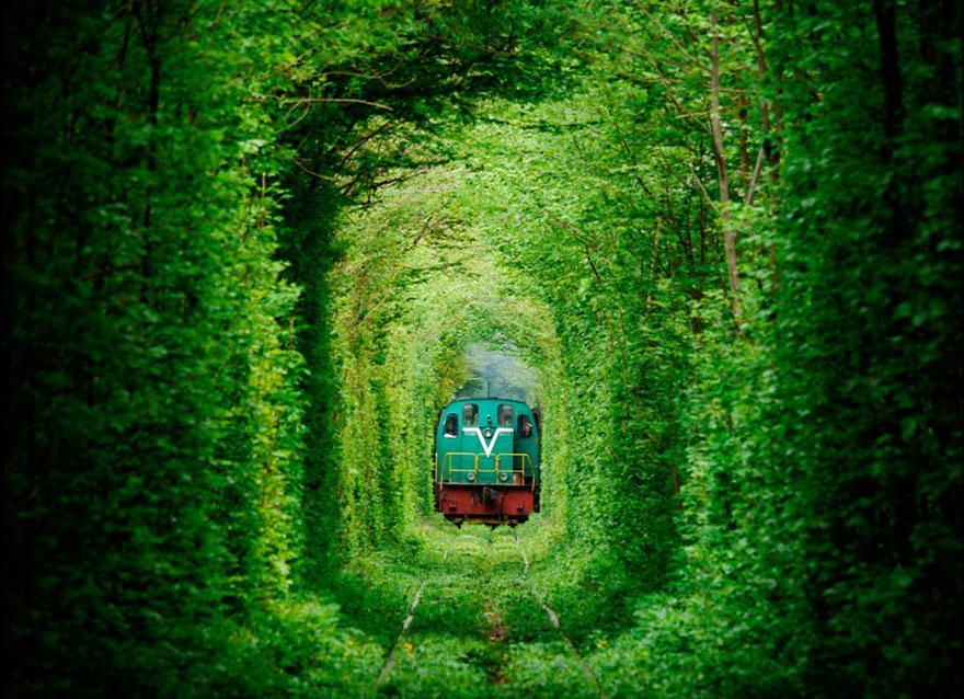 amazing-tree-tunnels-2-2