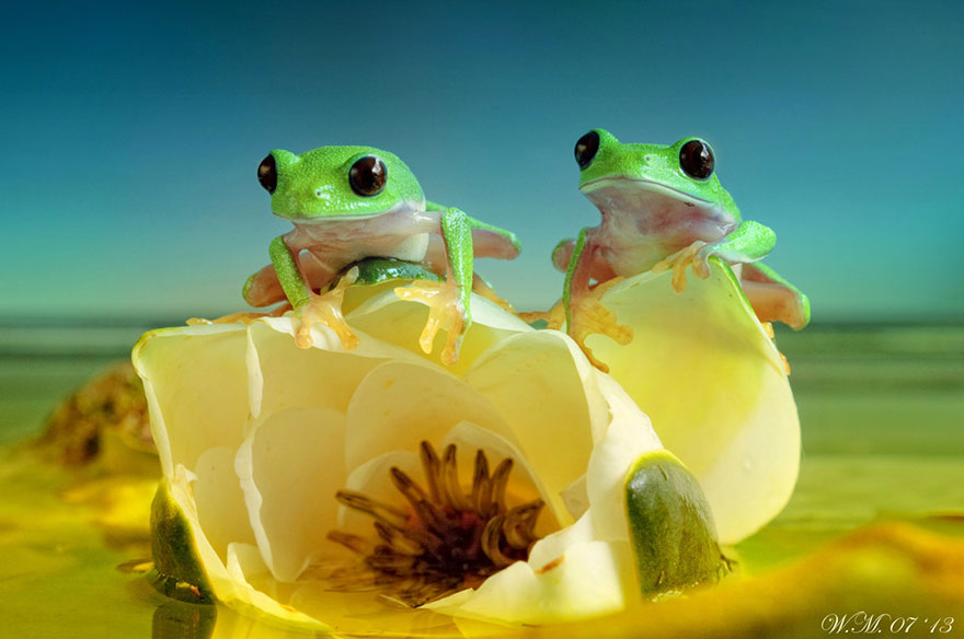 macro-frogs-wil-mijer-15