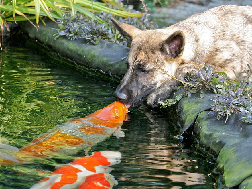 cute-kissing-animals-love-11__880