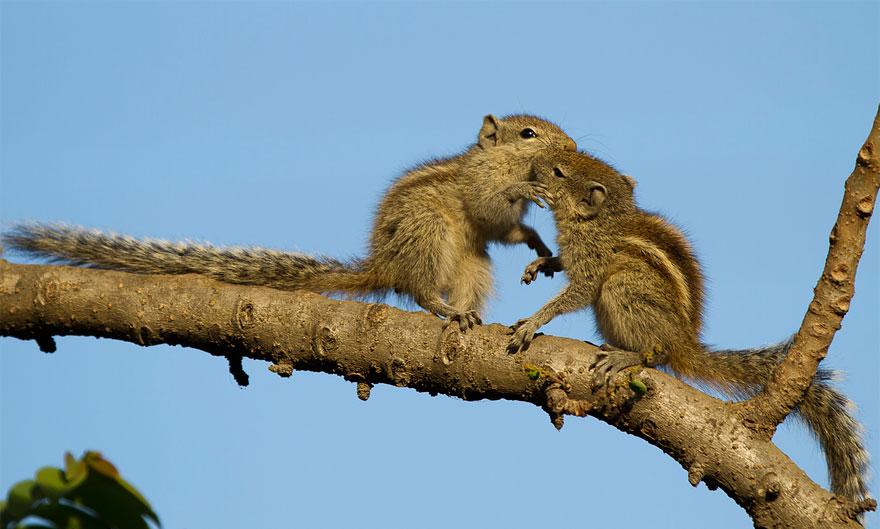 cute-kissing-animals-love-15__880