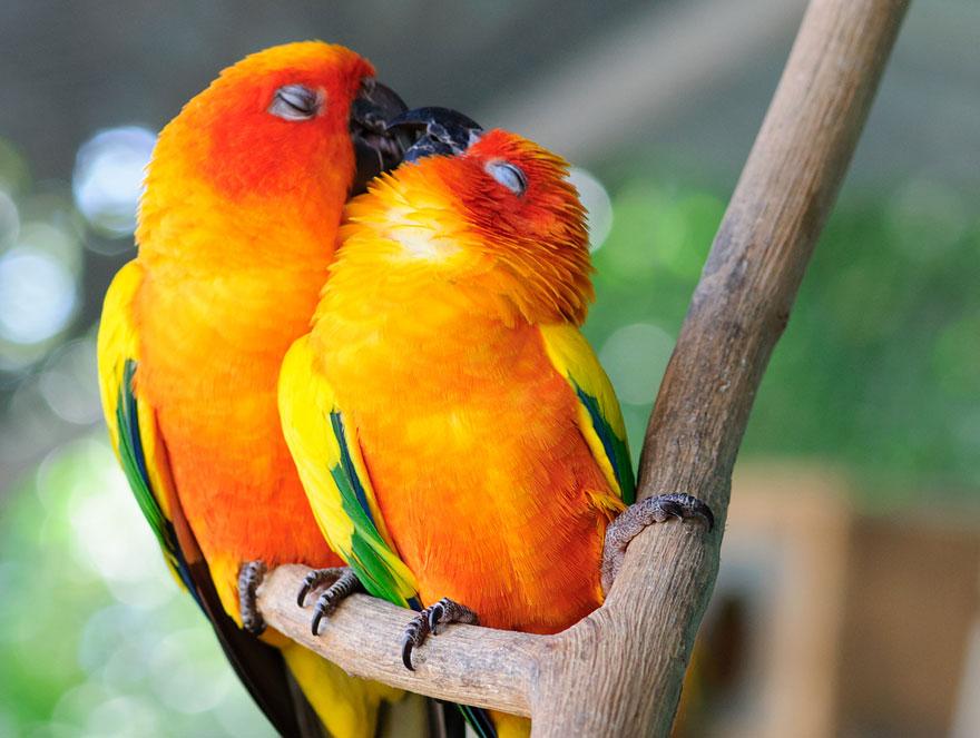 cute-kissing-animals-love-19__880