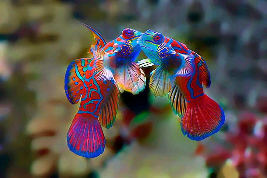 cute-kissing-animals-love-1__880