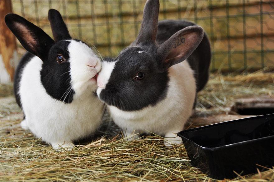 cute-kissing-animals-love-21__880