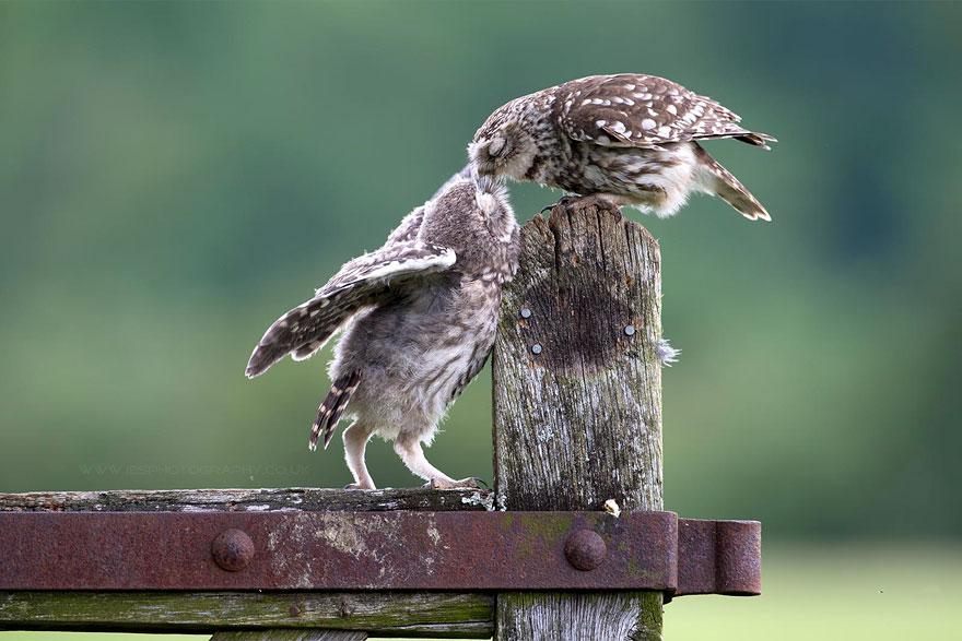 cute-kissing-animals-love-2__880