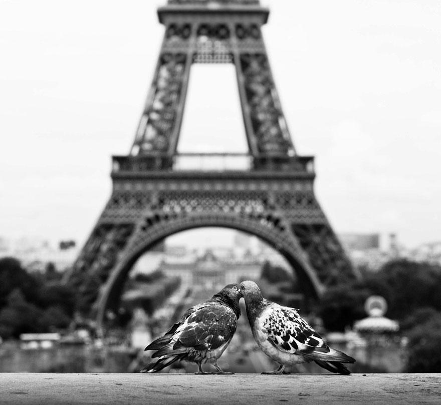 cute-kissing-animals-love-5__880