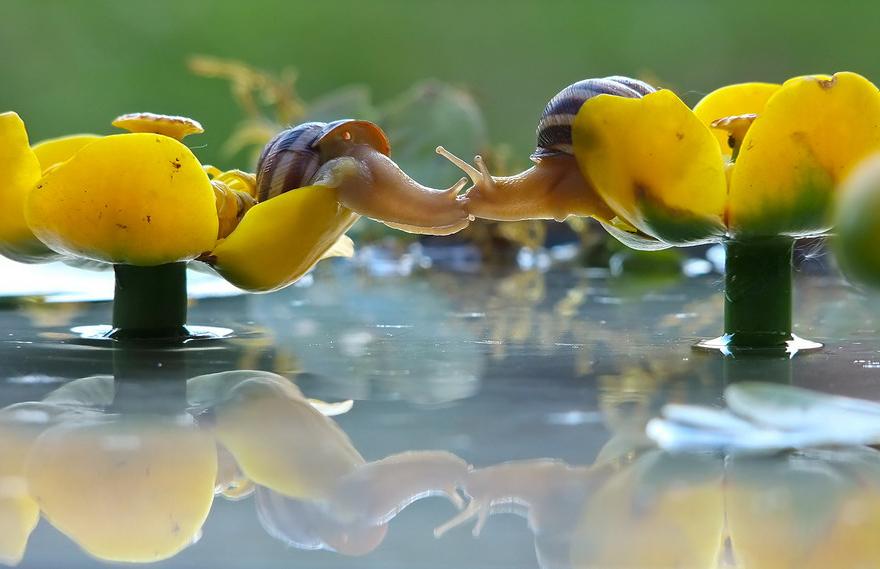 cute-kissing-animals-love-7__880