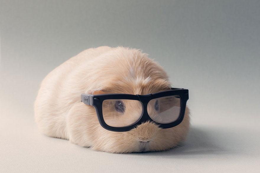 guinea-pig-booboo-lieveheersbeestje-2