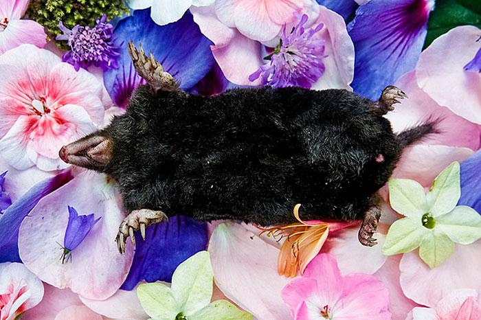 honoring-dead-animals-natura-morte-marina-ionowa-gribina-4