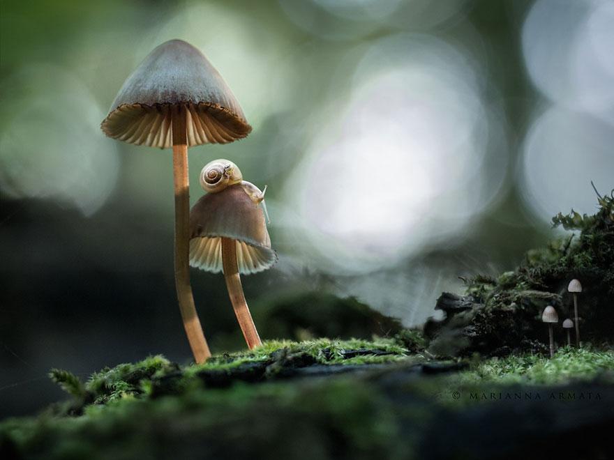 interesting-mushroom-photography-771__880
