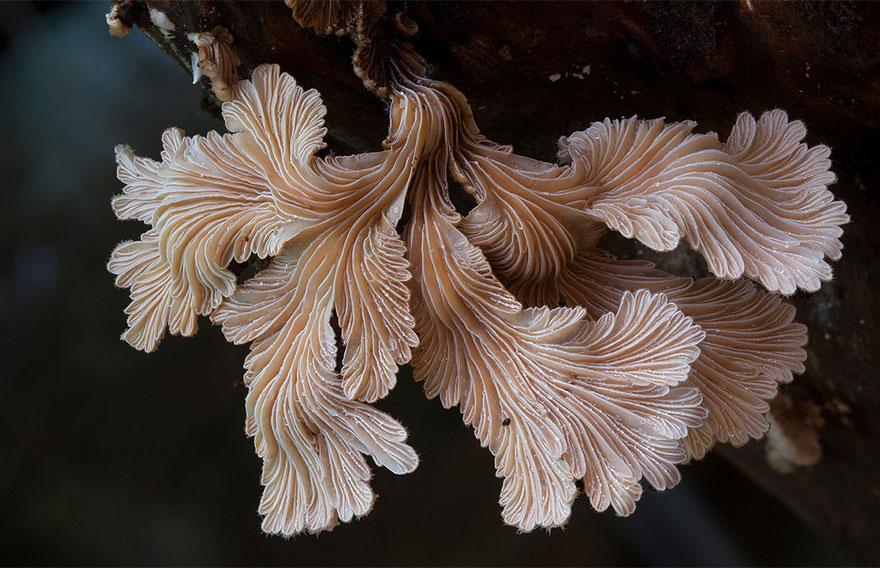interesting-mushroom-photography-82__880
