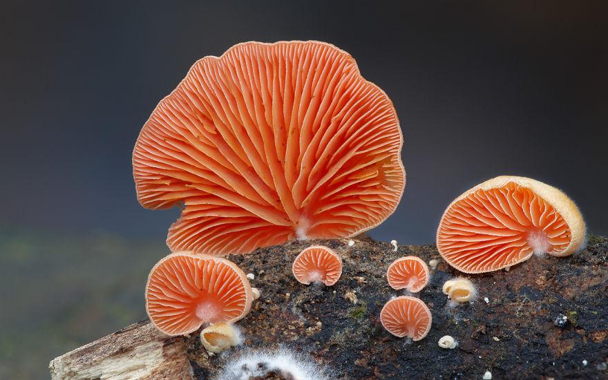 interesting-mushroom-photography-88__880