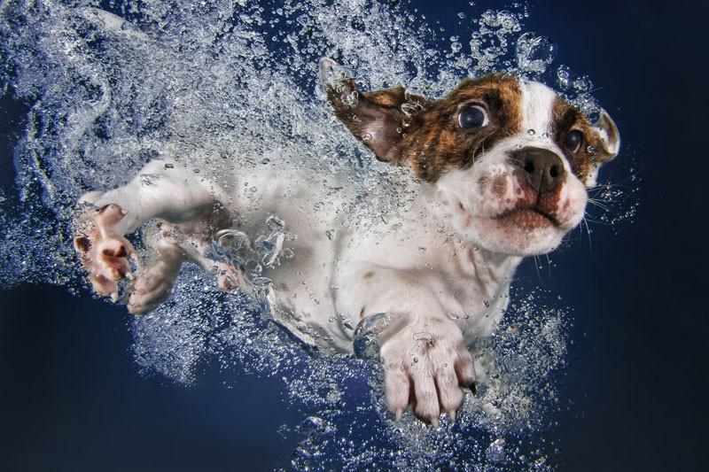 underwater-puppies-by-seth-casteel-6
