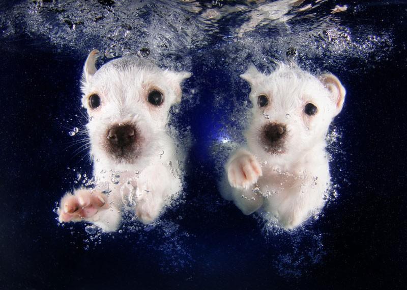 underwater-puppies-by-seth-casteel-7