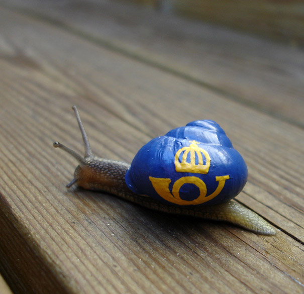 painted-snail-shell-4