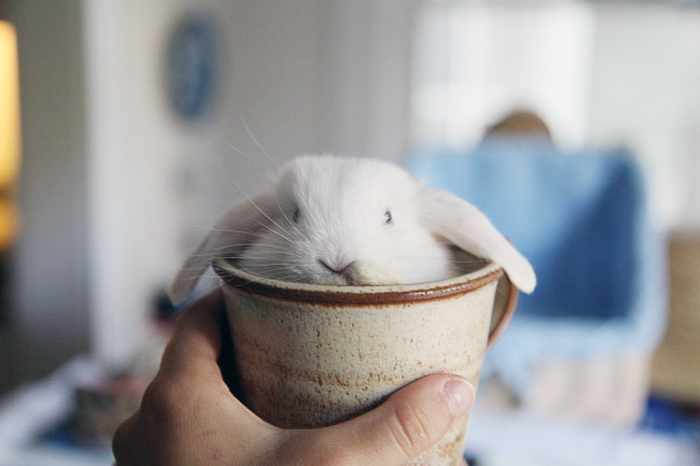 Cuteness-Explosion-Animals-In-Cups24__700