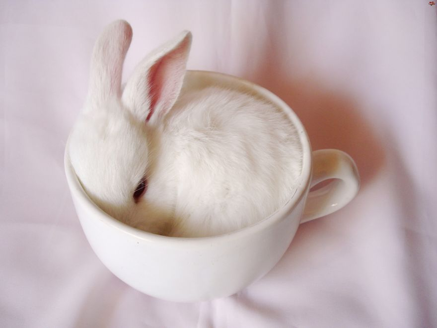 Cuteness-Explosion-Animals-In-Cups28__880