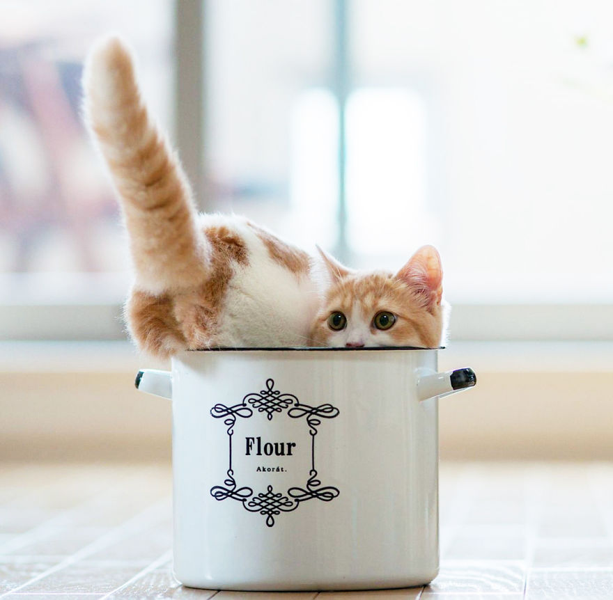 Cuteness-Explosion-Animals-In-Cups37__880