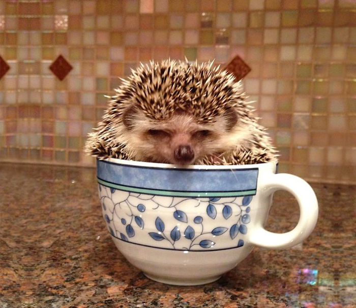 Cuteness-Explosion-Animals-In-Cups38__700