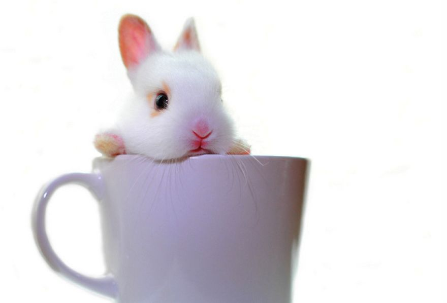 coffee-bunny-white-baby-2856-1334x907__880