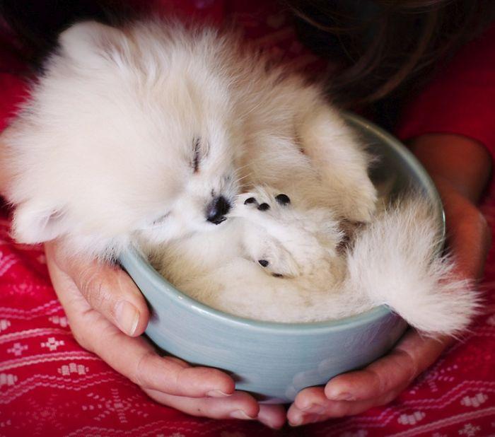 cute-animals-in-cups-48__700