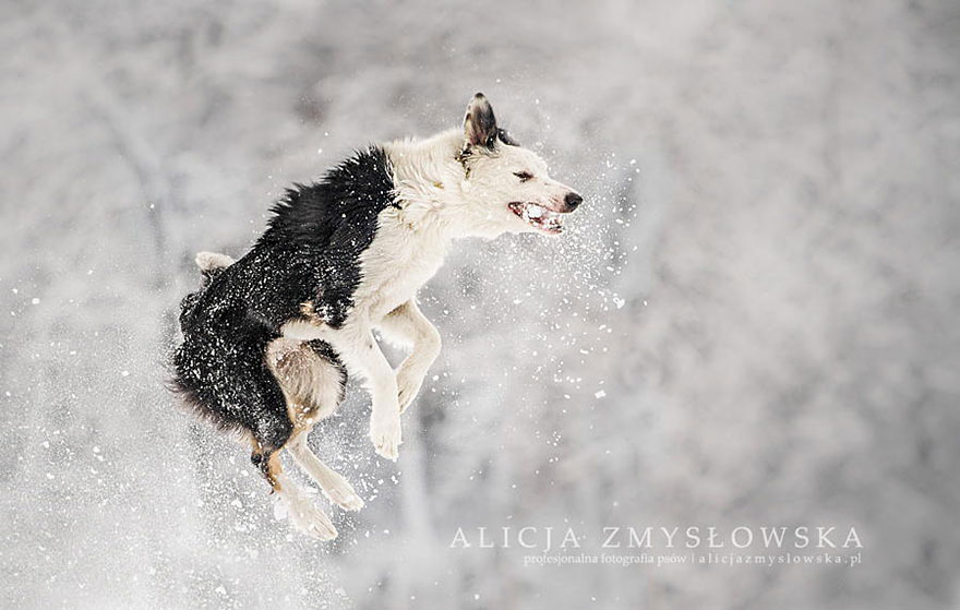 dog-photography-alicja-zmyslowska-10__880