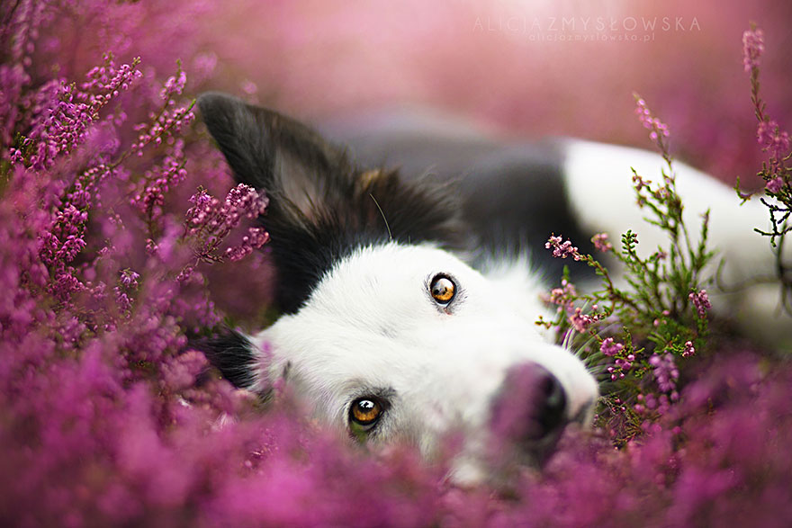 dog-photography-alicja-zmyslowska-1__880
