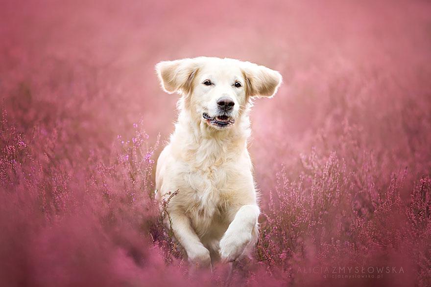 dog-photography-alicja-zmyslowska-24