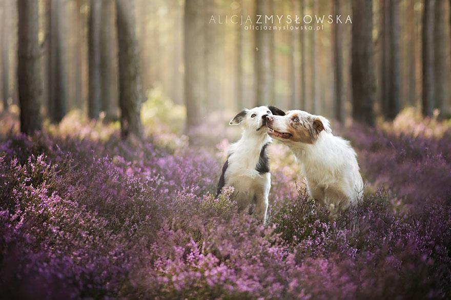 dog-photography-alicja-zmyslowska-26