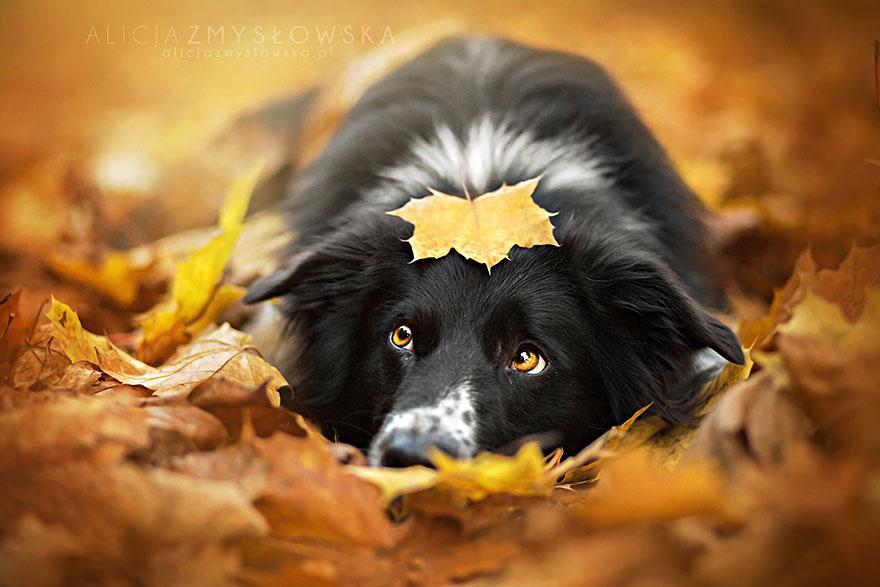 dog-photography-alicja-zmyslowska-2__880