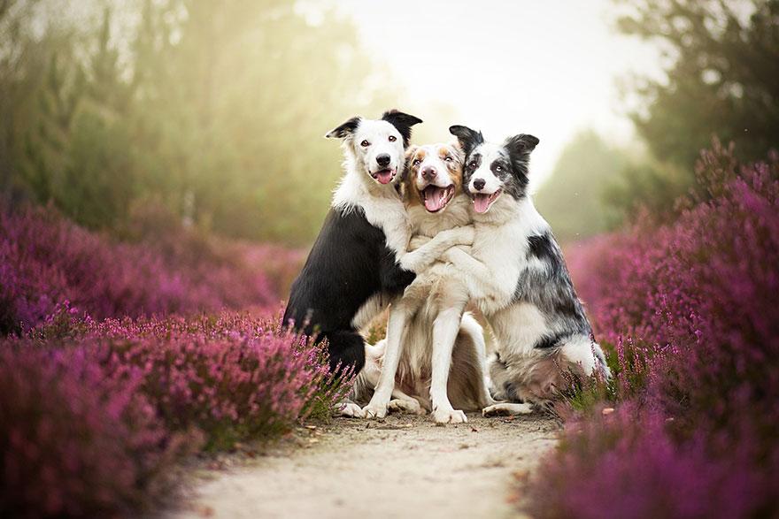 dog-photography-alicja-zmyslowska-3__880