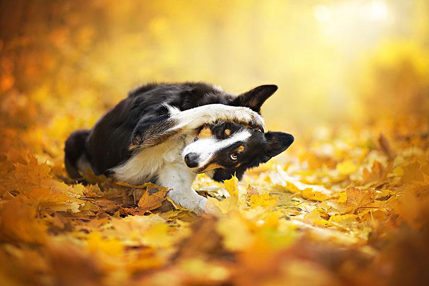 dog-photography-alicja-zmyslowska-6__880