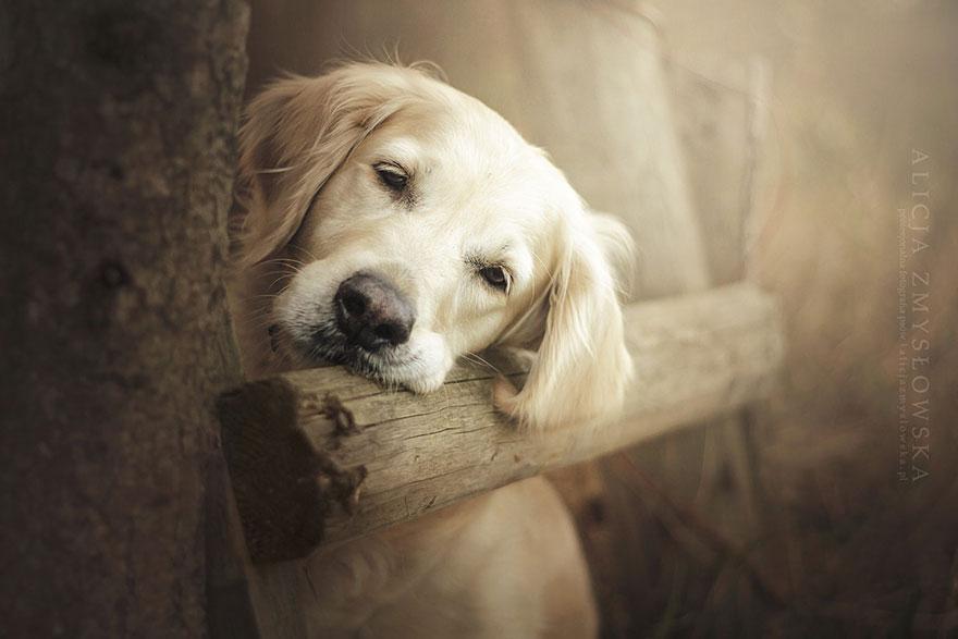 dog-photography-alicja-zmyslowska-7__880