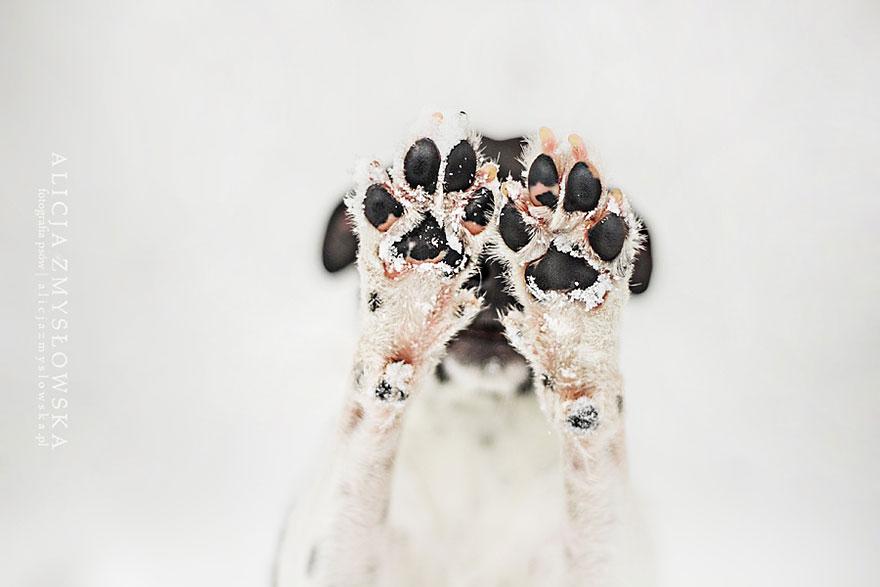dog-photography-alicja-zmyslowska-8__880