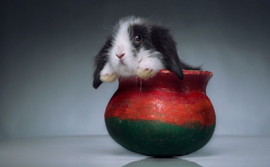 rabbit-red-black-animals-1128-1320x816__880
