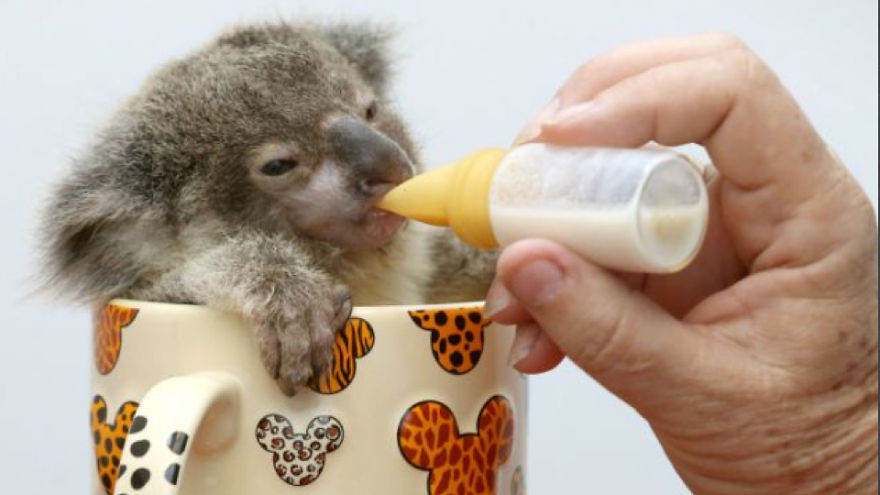 the-world_s-top-10-best-images-of-animals-in-cups-311__880.jpg-w584h3281__880
