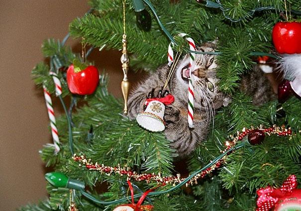 XX-animals-destroying-Christmas-16__605