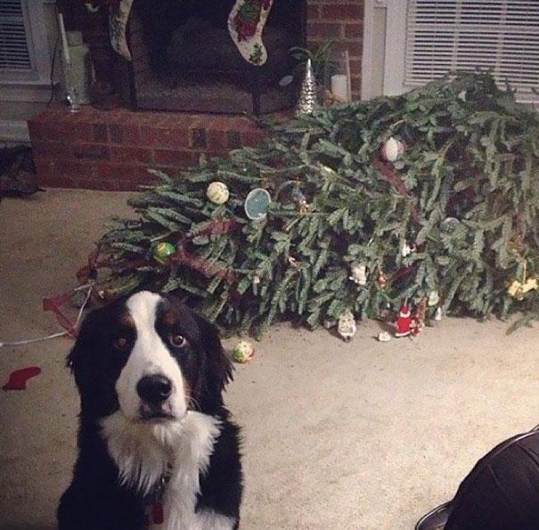 XX-animals-destroying-Christmas-1__605