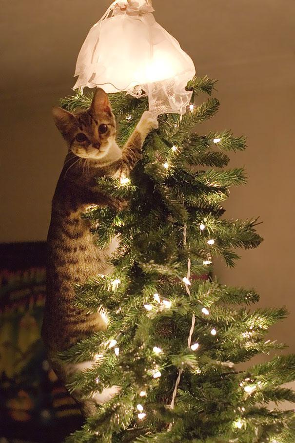 XX-animals-destroying-Christmas-8__605