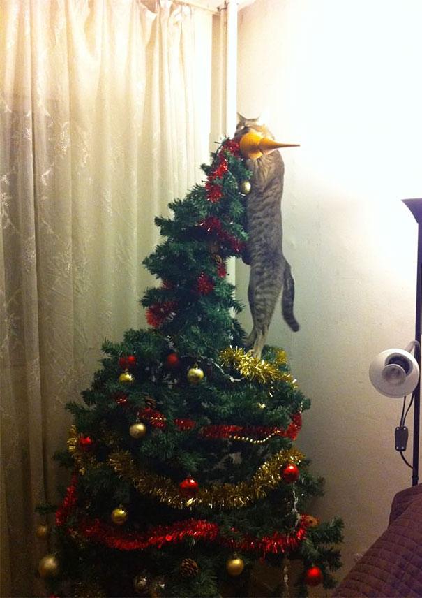 animals-destroying-christmas-cat-on-christmas-tree__605