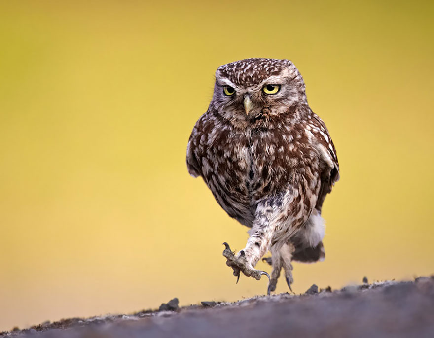 owl-photography-10__880