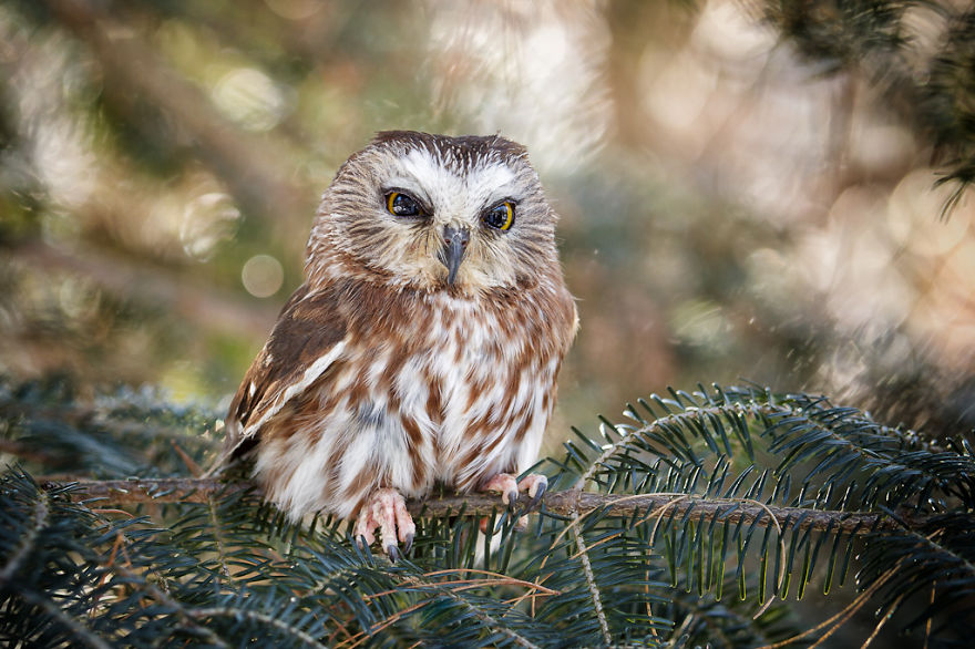 owl-photography-cute-104__880