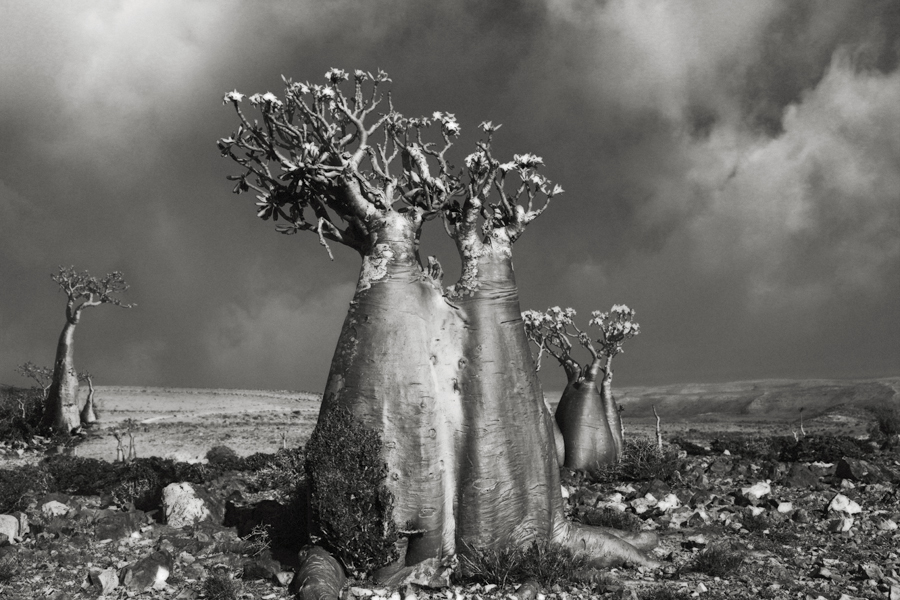 Desert-Rose-Wadi-Fa-Lang-copy