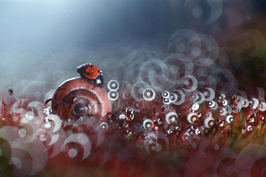 macro-photography-vadim-trunov-10__880