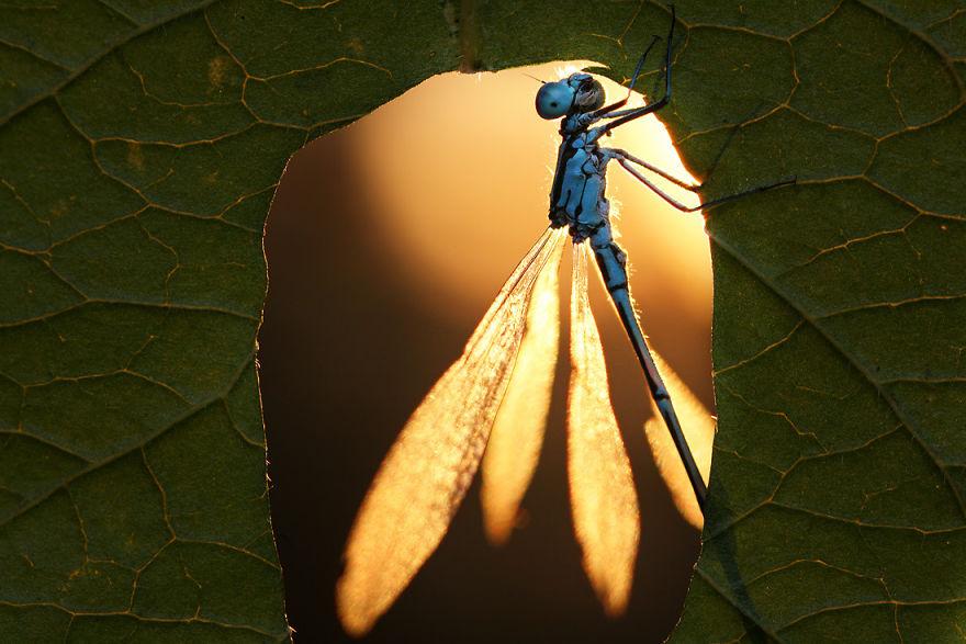 macro-photography-vadim-trunov-19__880