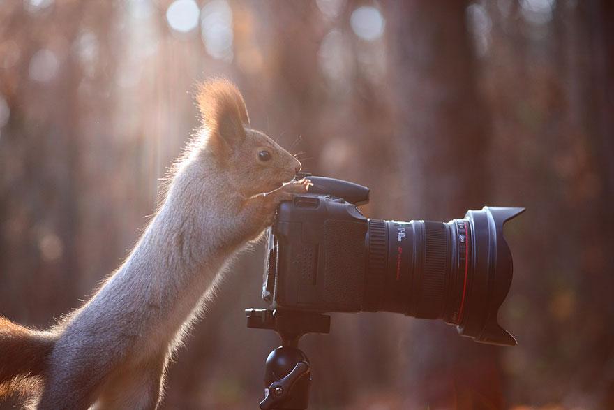 squirrel-photography-russia-vadim-trunov-12
