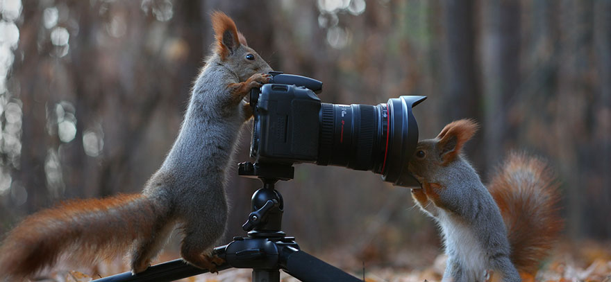 squirrel-photography-russia-vadim-trunov-13