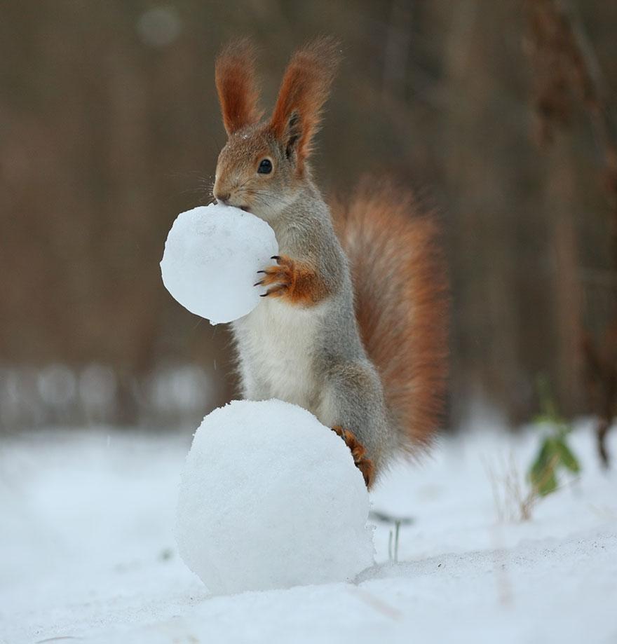 squirrel-photography-russia-vadim-trunov-4